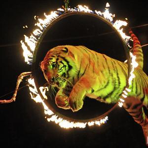 Цирки Новоалександровска