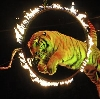 Цирки в Новоалександровске