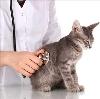 Ветеринарные клиники в Новоалександровске